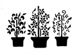 COUNTRY PLANTING POTS